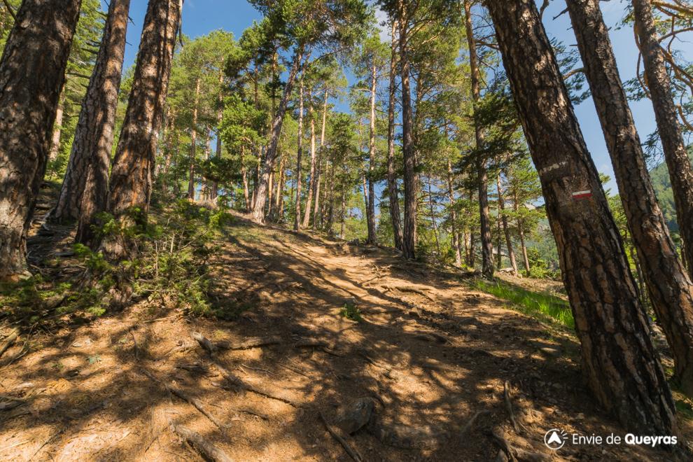 balisage gr5 sous bois soleil chateau queyras