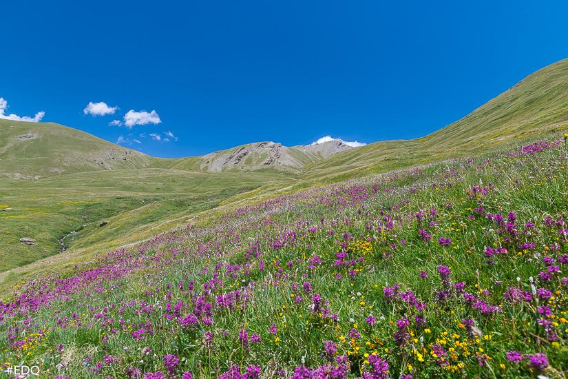 champs de fleurs sous le col