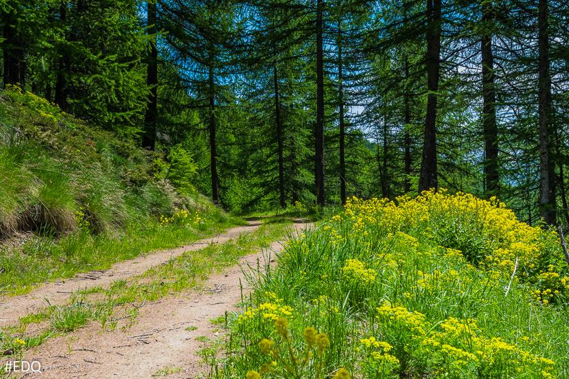 En forêt vers les Bertins