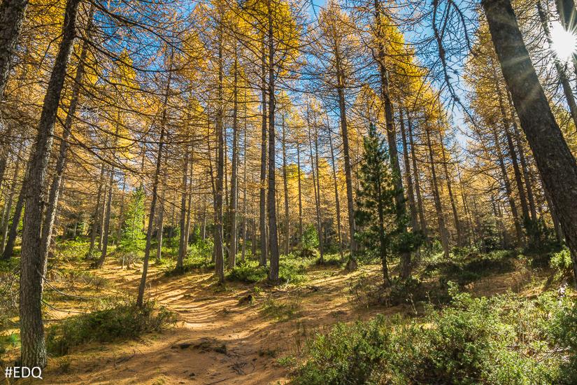 En forêt depuis le sentier du col Lacroix