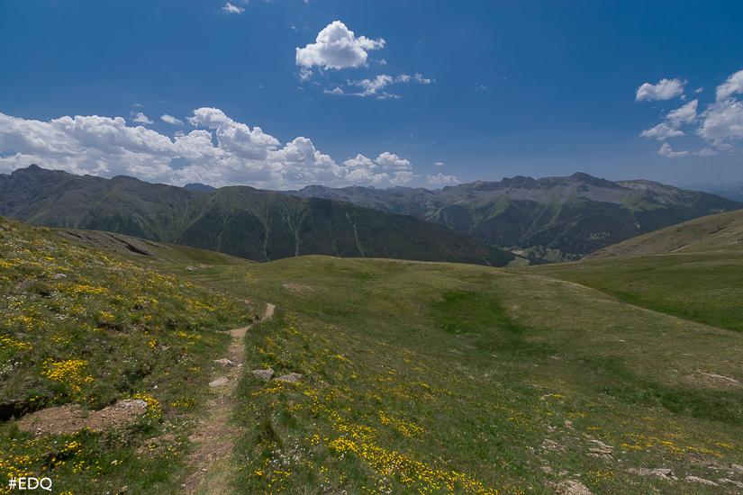 fleurs jaune prairies alpes verte ciel queyrassin