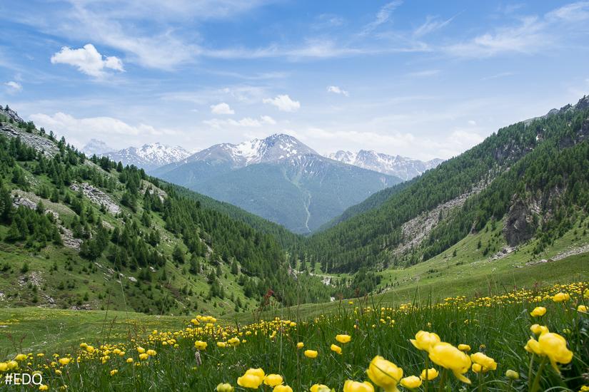 Dans la montée du Malrif : prairies et champs de fleurs jauness