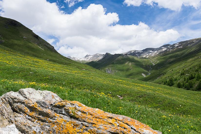 Dans la montée au Malrif : rocher, prairies vertes et flore de printemps
