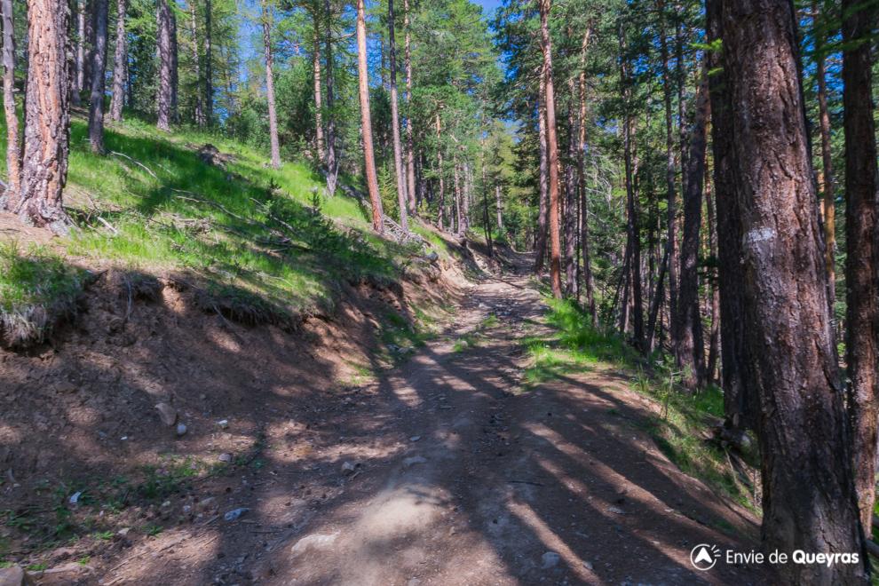 on retrouve le chemin forestier