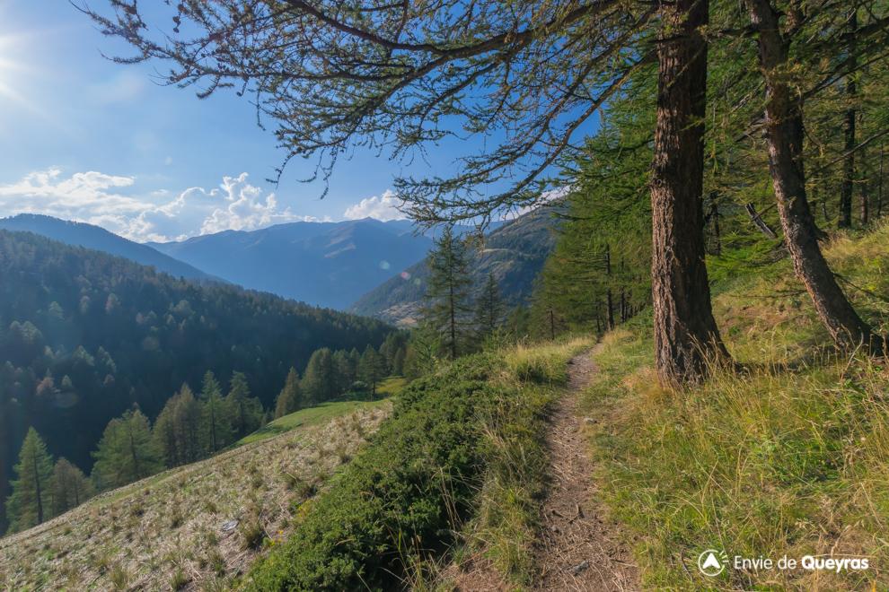 vue sur foret bois noir et alpages