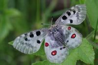 Queyras Nature - Guides Accompagnateurs Rando