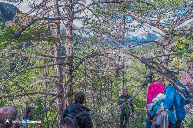 Présentation d'un bois mort et explication sur le dispositif de piégeage des insectes