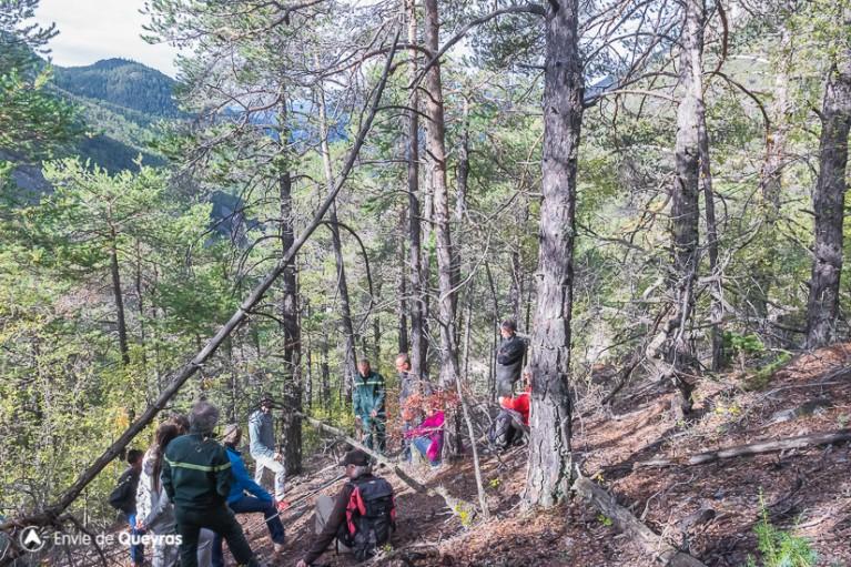 Présentation d'une zone de surveillance et des modalités de recensement autours des bois morts