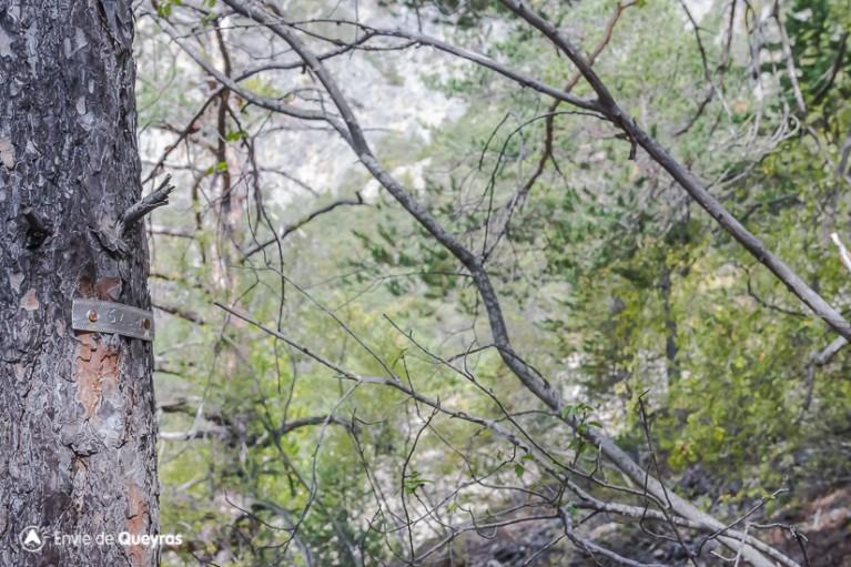 Triangulation des zones surveillance autours des pins sylvestres